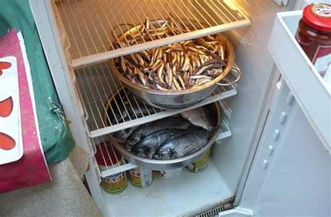 eis im kühlschrank vermeiden verschimmelte paprika im lager stuttgarter zeitung