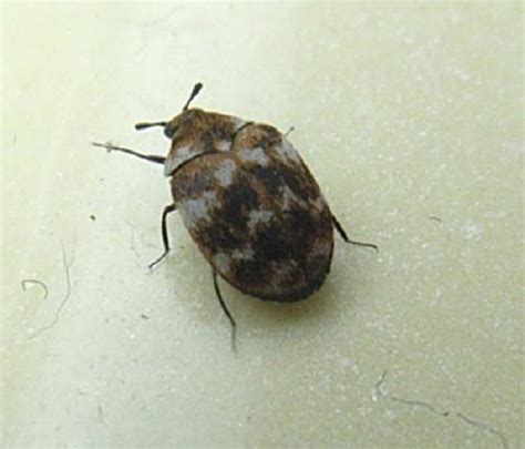 Small Beetles In Bathroom by Flyonahook Picture Gallery