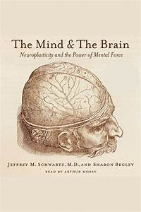 The Mind And The Brain By Jeffrey M  Schwartz  Sharon