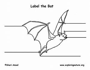 Bat Labeling Page
