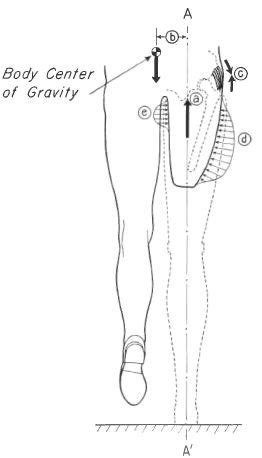 Fig. 4. Forces acting on the stump and pelvis | O&P