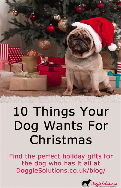 10 things your dog wants for christmas