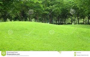 beautiful sloping backyard with grass and tree in stock photo image 24040370