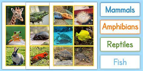 Animal Groups Sorting Cards Photos animal groups sort