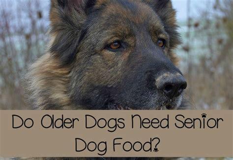 older dogs  senior dog food