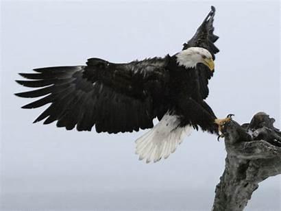 Eagle Lady Alaska Kenai Jean Keene Homer