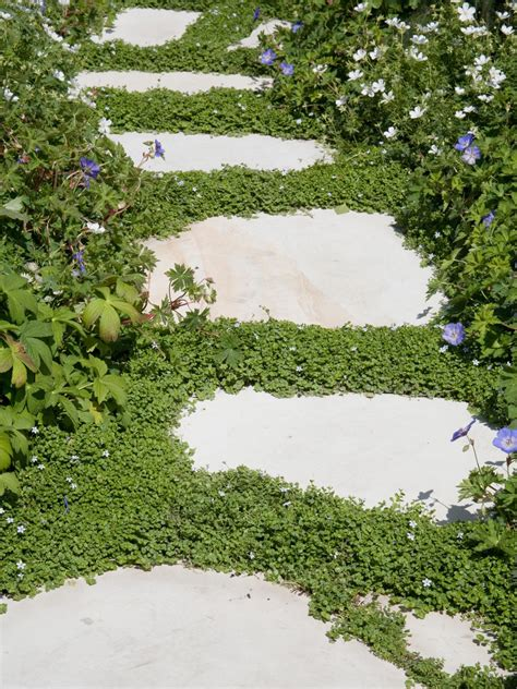 ideas for groundcover alternatives to grass hgtv