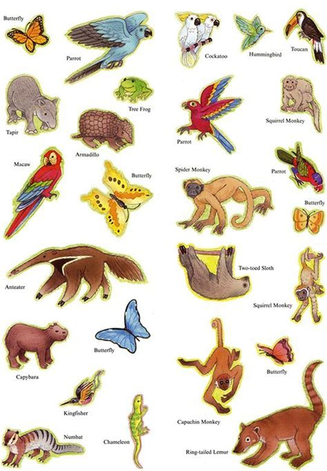 Best 25+ Rainforest facts for kids ideas on Pinterest