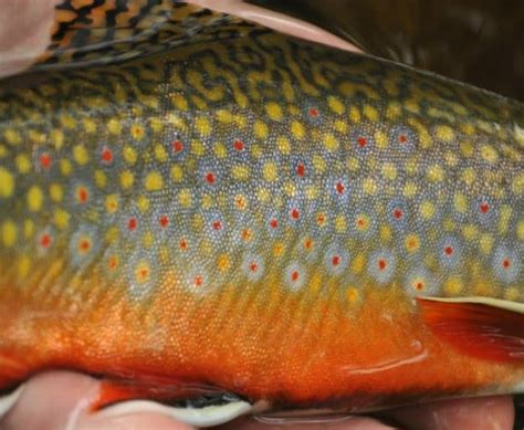 Pa Fish And Boat Delayed Harvest by Northern Pennsylvania Fishing Report September 24 2014