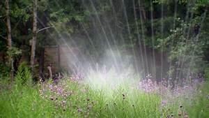 Muss Der Rasen Nach Dem Düngen Gewässert Werden : hitzesch den im rasen was tun ratgeber garten zierpflanzen ~ Yasmunasinghe.com Haus und Dekorationen