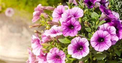 Die Besten Balkonpflanzen by Die Besten Balkonpflanzen Mai Bis Oktober Soyer Balkone