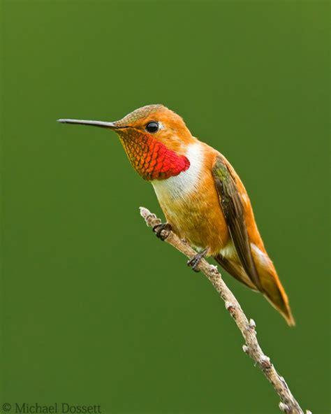 michael dossett wildlife and nature photography