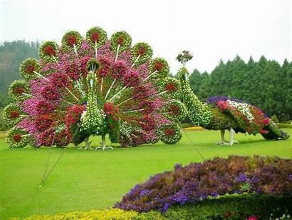 Peacock Garden Xcitefun Outdoor