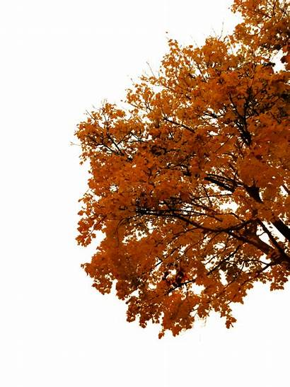 Tree Autumn Trees Transparent Cutout Clipart Fall