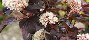 bouturage comment faire une bouture bouturer des plantes With jardin de rocaille photos 3 fiche pratique les lavandes detente jardin