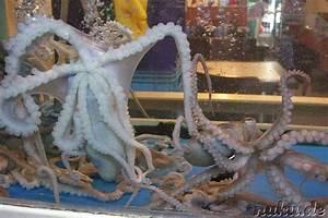 Kühlschrank Saugt Sich Nicht Fest : lebender oktopus korea ostasien koreanische k che speise trank praktikum in korea 2005 ~ Frokenaadalensverden.com Haus und Dekorationen