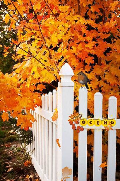 Autumn Animated Fence Fall Leaves Around Falling