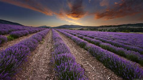 provence wallpaper wallpapersafari