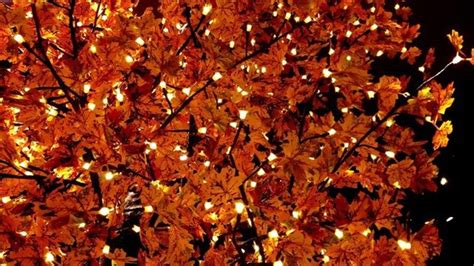 Fall Esthetic Backgrounds by Autumn Cosy Fall Lights Tree Image 4729281 By