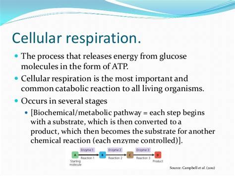 energy transformations in cells