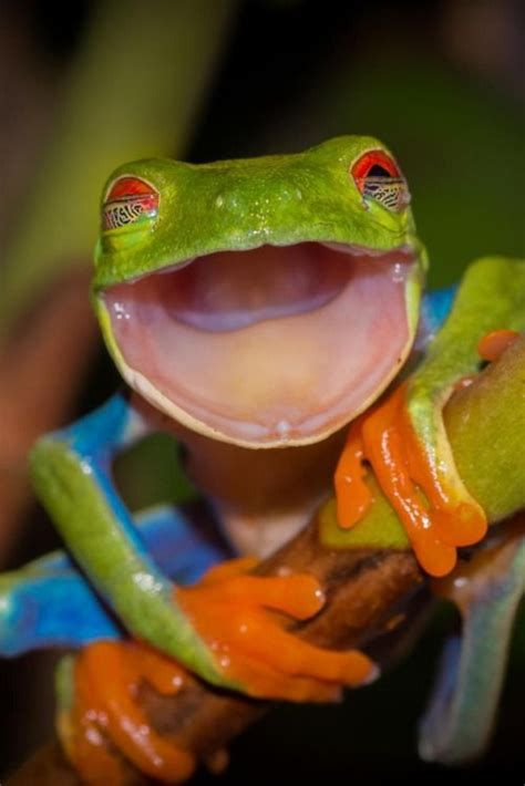 funny smiling frog luvbat