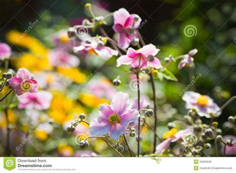 japanese summer flowers colorful summerflowers royalty free stock images image 24300529
