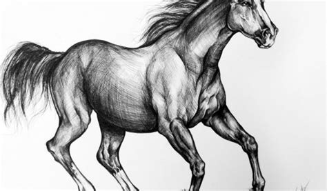 horse drawings  clipart library horse sketch drawings