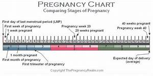 Stages of Pregnancy Chart | Weeks-Months-Trimesters