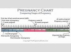 Stages of Pregnancy Chart WeeksMonthsTrimesters