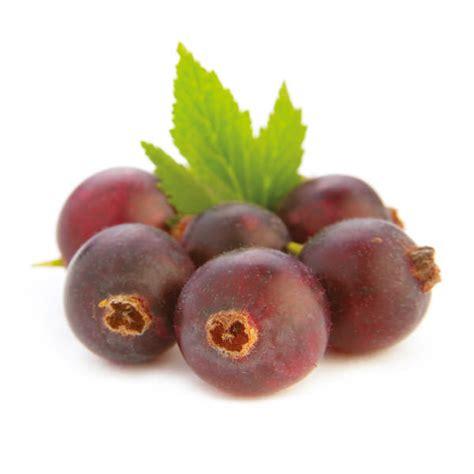 Jostabeere (stamm) - Ribes Nidigrolaria