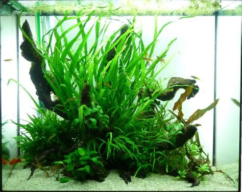 Aquascaping Tallsquare Tanks  Tropical Fish Forums