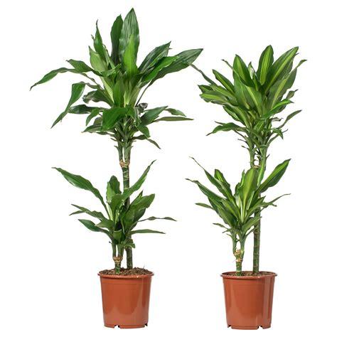 plante d interieur ikea swyze