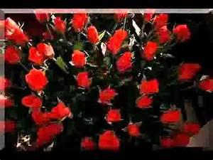 Begleitpflanzen Für Rosen : hildegard knef f r mich solls rote rosen regnen youtube ~ Orissabook.com Haus und Dekorationen