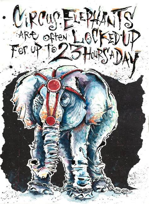 images  stop circuses  zoos  pinterest