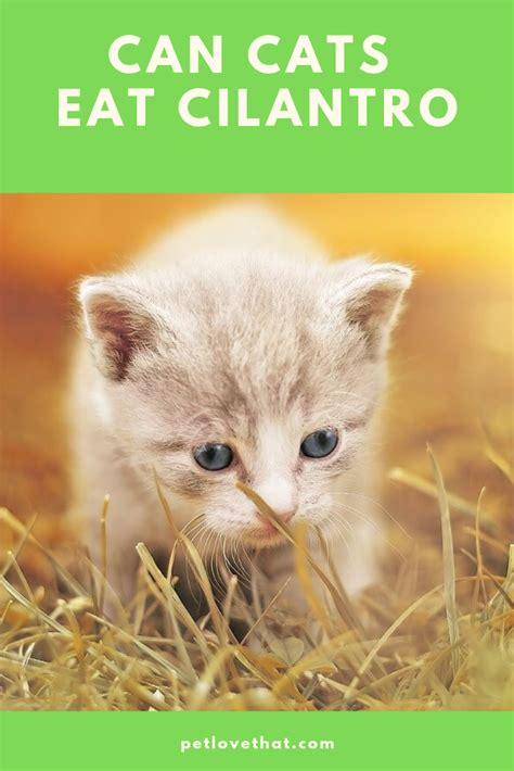 is parsley safe for cats