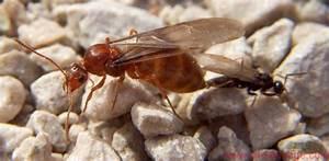 Ameisen Mit Flügel : namibia forum ameisen aus namibia 3 4 results from 12 ~ Buech-reservation.com Haus und Dekorationen