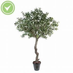 Arbre D Intérieur : arbre d 39 int rieur maison et fleurs ~ Preciouscoupons.com Idées de Décoration