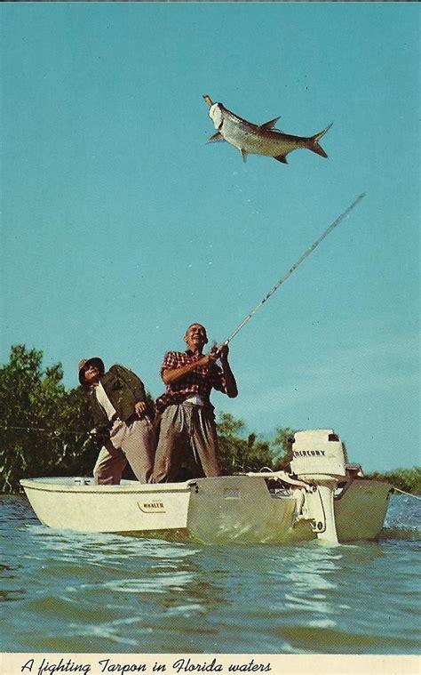 fishing florida postcards tarpon fighting everglades national park