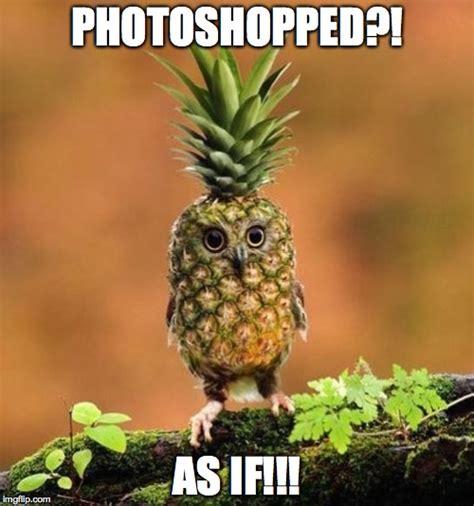 Pineapple Memes - ananas pineapple meme 28 images ananas pineapple meme 28 images telefrancais on tumblr i m