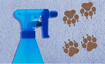 Carpet Stain Removal Cleaning Remove Stains Tricks