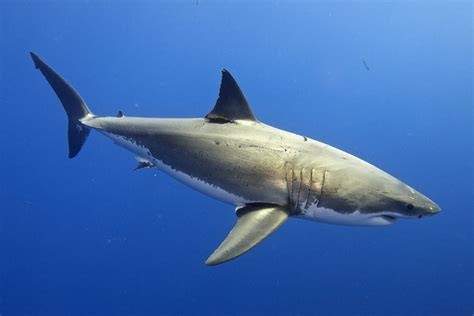 Shark Image The Most Surprising Facts About Sharks