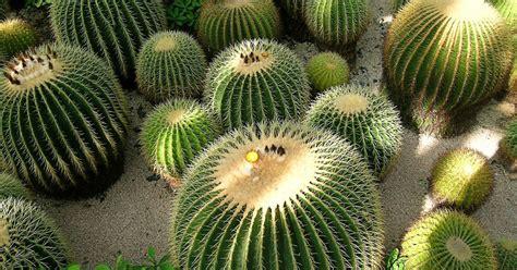 yan's bonsai: How To Grow Cactus