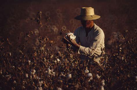 hand harvesting  hard work national geographic