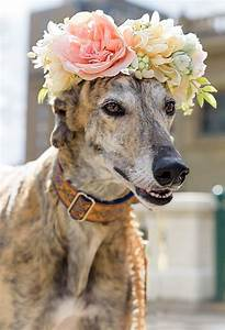 Month Of March Calendar 2020 Southern Alberta Greyhound Association