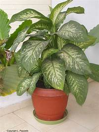 house plants pictures About House Plants | Garden Guides