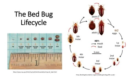 do bed bugs come out when the lights are on do bed bugs only come out at night bed bugs how to protect