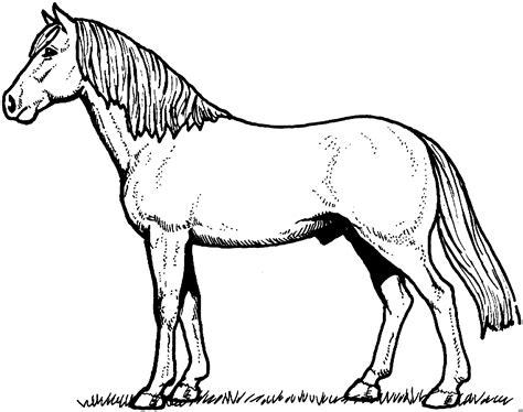 huebsches pferd ausmalbild malvorlage tiere