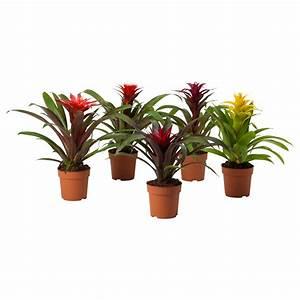 Pflanzen Bei Ikea : hej bei ikea sterreich pflanzen topfpflanzen und ~ Watch28wear.com Haus und Dekorationen