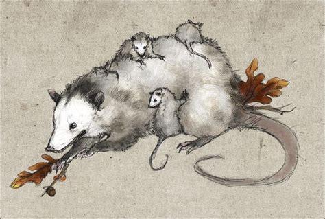 possum art   opossum images  pinterest