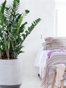 Pflanzen Im Schlafzimmer : schlafzimmer ideen pflanzen die entspannen ~ Indierocktalk.com Haus und Dekorationen